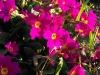 kwiaty-001