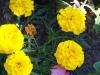 kwiaty-005