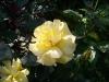 kwiaty-008