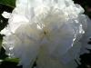 kwiaty-010