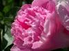 kwiaty-011