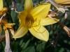 kwiaty-012