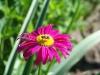 kwiaty-014