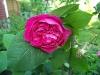kwiaty-015