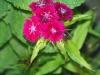 kwiaty-016