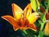 kwiaty-017