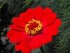 kwiaty-018