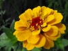 kwiaty-019