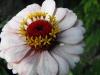 kwiaty-020