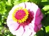 kwiaty-021