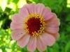 kwiaty-022