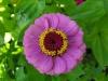 kwiaty-023