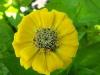 kwiaty-024