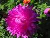 kwiaty-025