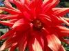 kwiaty-027