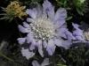 kwiaty-028