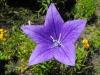 kwiaty-030