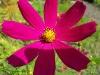 kwiaty-031