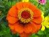 kwiaty-035