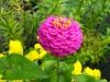 kwiaty-036