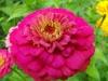 kwiaty-037
