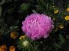 kwiaty-039