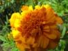 kwiaty-040