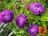 kwiaty-041