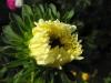 kwiaty-043