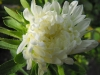 kwiaty-044