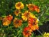 kwiaty-045