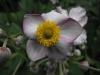 kwiaty-047