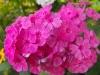 kwiaty-049