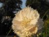 kwiaty-050