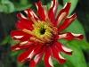 kwiaty-051