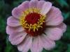kwiaty-052