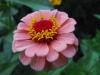 kwiaty-053
