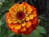 kwiaty-054