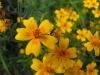 kwiaty-055