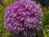 kwiaty-057
