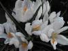 kwiaty-058
