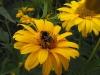kwiaty-059