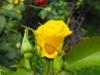 kwiaty-060