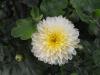 kwiaty-061