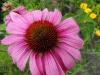 kwiaty-063