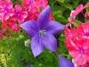 kwiaty-064