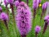 kwiaty-065