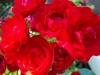kwiaty-068