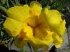kwiaty-069