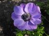 kwiaty-070